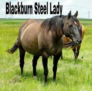 quarter horse north dakota