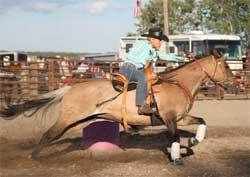 Blackburn Foundation Horses Performers North Dakota